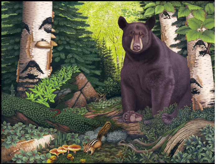 """Daydreaming"" (Black bear-Superior National Forest) Copyright 2006 - 18 X 24"