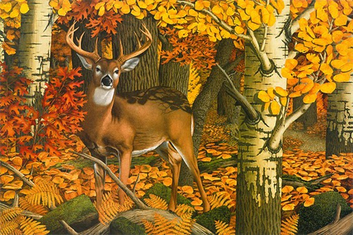 Indian Summer Whitetail-Copyright 1988 - 8 ¾ x 13 1/8