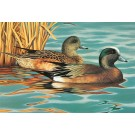 American Wigeons-Copyright 1987 - 8 x 11 3/4