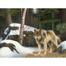 """Curious Company"" (Eastern Gray Wolf- Superior National Forest) Copyright 2010 - 18 X 24"