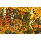 Indian Summer Whitetail-Copyright 1988 - 16 3/8 x 24 3/8